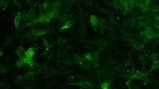 21JAN20 Glial Restricted Progenitor Cells GRPjpg