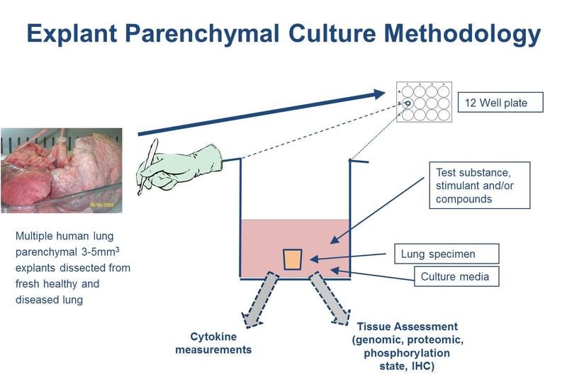 Explant-Parenchymal-Culture-Methodology_V3