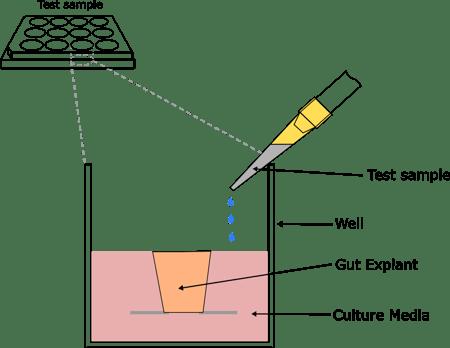 IBD-Explants-Diagram