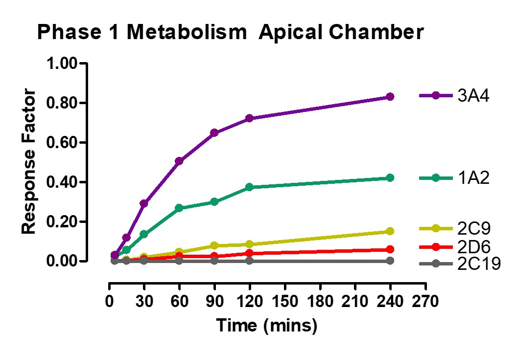 Phase 1 Metabolism Apical Ussing Chamber