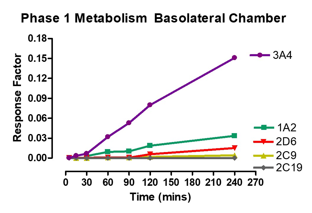 Phase 1 Metabolism Basolateral Ussing Chamber