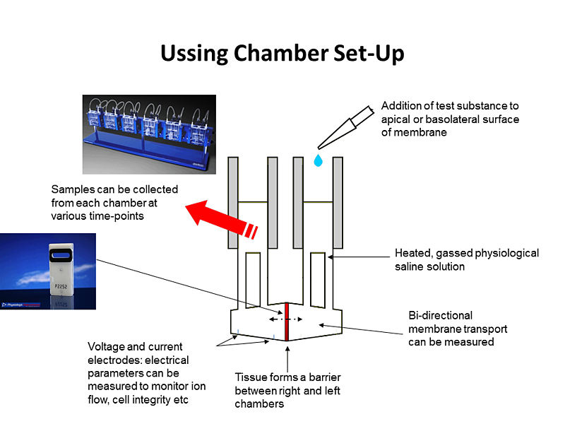 Ussing-Chamber-Set-Up