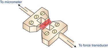 Wire-myograph-illustration