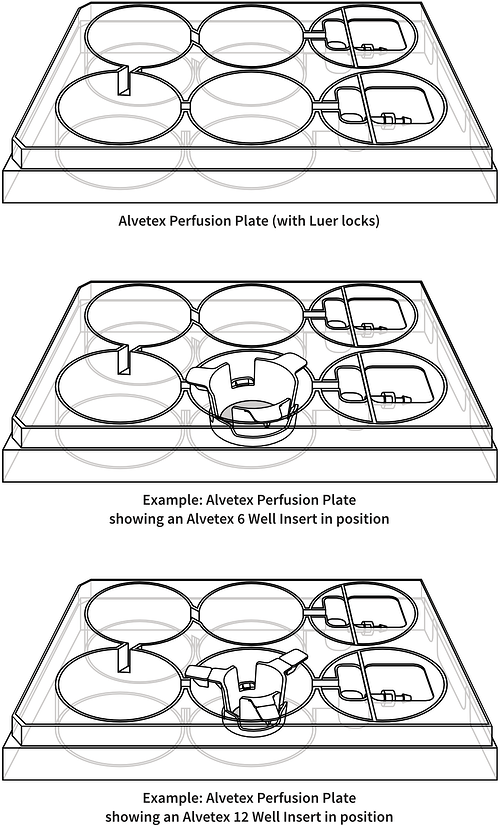 alvetex-perfusion-plate-drawing