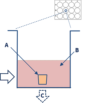 labelled explant model diagram-3
