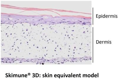 skimune-skin-model-1