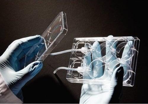 alvetex-perfusion-plate