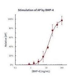 stemfactor-bmp-4-human-recombinant-p205-164_medium