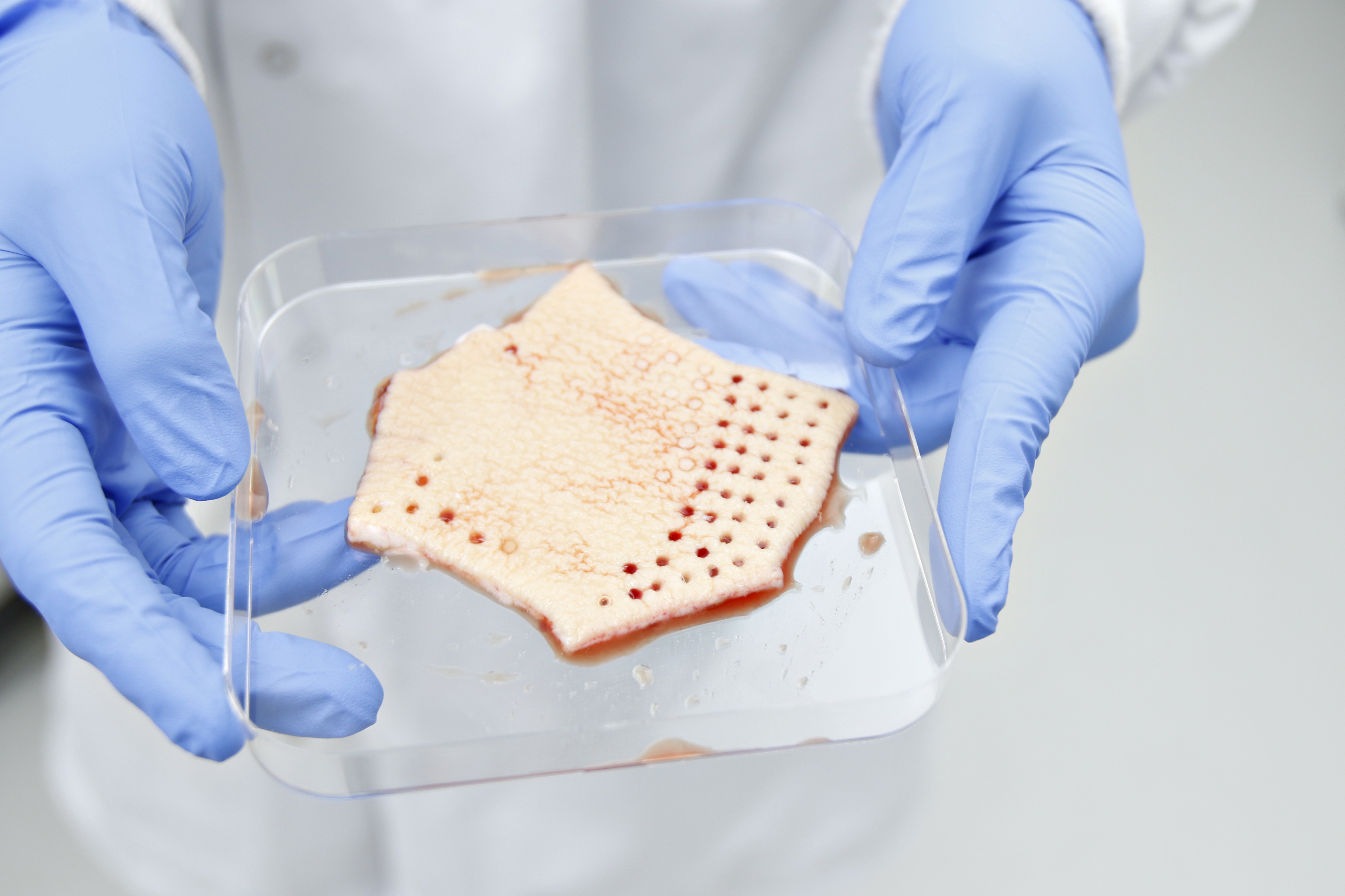 What is Human Tissue Testing?